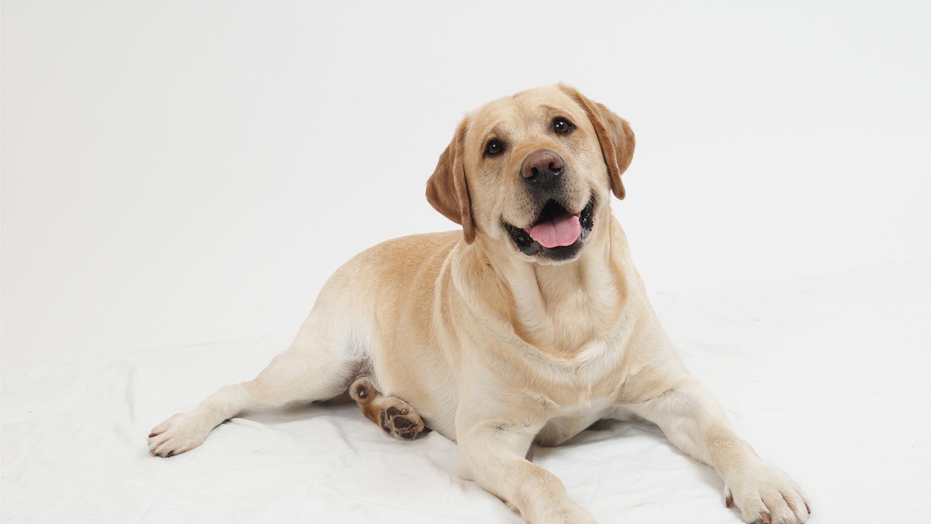 Dog Day Care in Marda Loop Calgary - Marda Loop Doggie ...